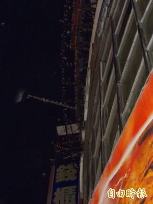 上千飛燕於斗六夜空亂舞  原來是為了...