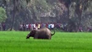 大象暴衝 5村民被踩扁身亡