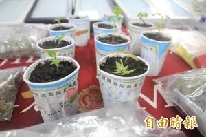 USC高材生返國  指導製毒種大麻
