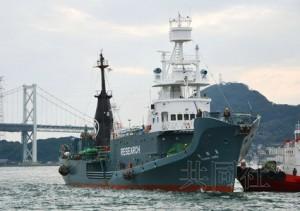 日本以科研名義捕鯨 澳洲:非常失望
