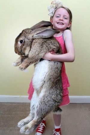 巨兔家族出列!  養牠們每年要花23萬台幣