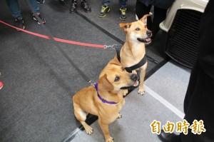 春季寵物展 動物之家開放認養訓練犬隻