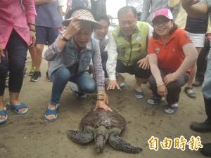 11隻體弱受傷海龜   今野放大海