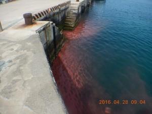 東吉港區紅通通 珊瑚產卵報喜訊