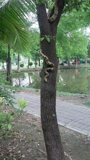 錦蛇不屬於生態公園? 遭通報抓走引網友熱議