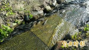 生態奇景!龍潭湖魚群這3天「力爭上游」