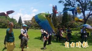 鸚鵡飛揚  台東森林公園七彩繽紛