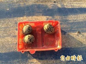 澎湖鳥蛋好貴! 撿一顆可能被罰30萬元