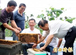 祭出10萬蜜蜂大軍 搶救絲瓜生機