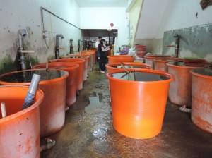 黑心海帶泡碳酸氫銨   無良業者被訴