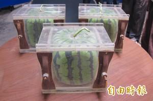 龍井農會客製方形西瓜 限量100顆