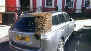 追隨蜂后 「蜜蜂大軍」不離不棄跟蹤這輛車…