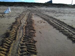 澎湖頻傳海龜登岸產卵喜訊 稍解吉貝殺龜陰霾