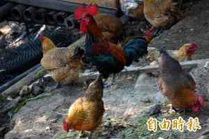 天津爆首例H7N9   我提高旅遊疫情警示