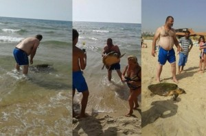 發現重傷海龜  遊客竟拖上岸施虐踩踏