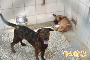 傳棄養3流浪狗 動物收容所:陸軍官校早有送養紀錄