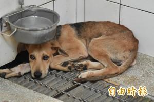 營區犬隻造冊列管 動保人士:高標訴求反害死軍中流浪犬
