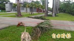 尼伯特出海時間延後 台南市區最大陣風達10級