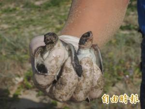 海龜長期志工訓開跑 建立澎湖保育人才庫