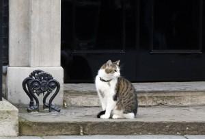 「首相換了但本喵不走」 貓大臣賴瑞將留英國官邸