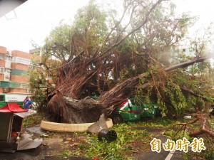 尼伯特侵襲 台東樹木毀損上百萬棵