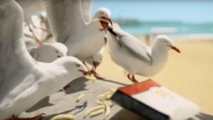 海鷗貪吃猛搶遊客薯條 速食店用超狂包裝防治