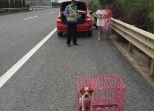 好狠! 高速公路爆胎 拿寵物狗當三角錐