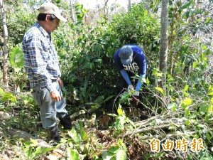 台東風災需農業志工 協助農園復建