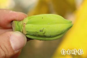 颱風後續效應 香蕉、木瓜、鳳梨價格齊飆漲