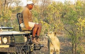 撞見野生獅子 南非男子僵坐全身而退