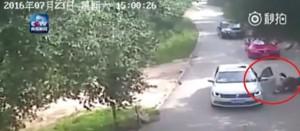 猛獸區下車遭虎咬死 驚悚畫面曝光
