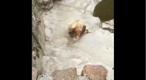 救救牠!這隻北極熊讓人心碎...
