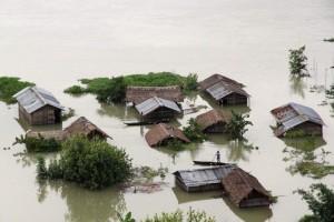 印度暴雨近百人死於水患 珍貴獨角犀牛慘滅頂