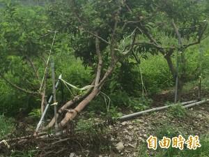 善款幫忙!台東尼伯特颱風災區重建融資3年免息