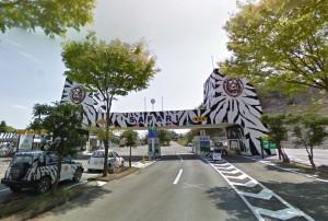日本動物園黑熊攻擊飼養員 送醫不治