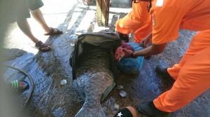 打撈死亡隆頭鸚哥魚挨告 蘭嶼鄉民斥海巡誣陷