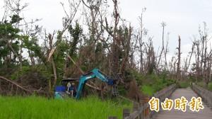 台東森林公園防風林災後整地 準備造林復建