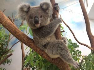 動物園20年沒調票價  傳柯文哲將取消軍公教優惠