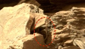 NASA在火星拍到蛇?  照片引發爭議與質疑