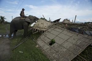 印度保護犀牛拆違建 用大象當「挖土機」