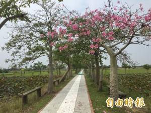 美!台南這條路好「詩意」