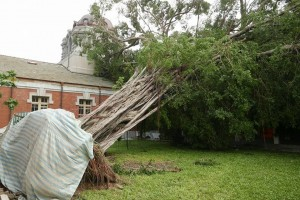 風災摧殘國定古蹟 百年老榕待搶救