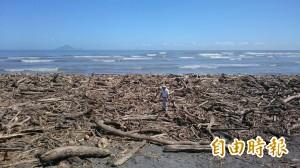 壯圍海灘堆積漂流木 綿延5公里