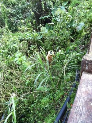虎頭蜂窩被颱風吹落 桃山學生教會避「蜂」頭