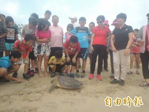 澎湖野放海龜 表揚保育急先鋒