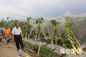 颱風後「農業孤兒垃圾」沒去處 縣府幫忙想辦法