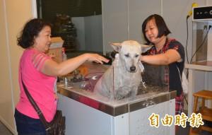 台中寵物用品展開幕 大推認養不棄養