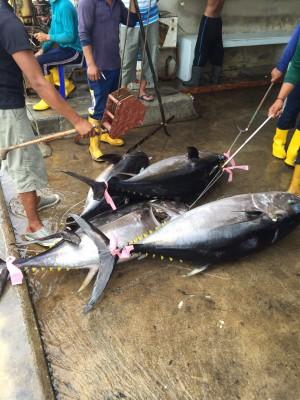傳斯里蘭卡漁民 不滿台資船隊卸貨