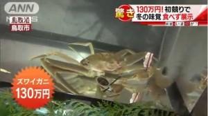 好貴! 日本松葉蟹拍賣 130萬日元創紀錄