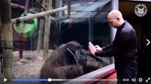 萌!神奇魔術讓猩猩看傻 牠竟用這個方法檢查